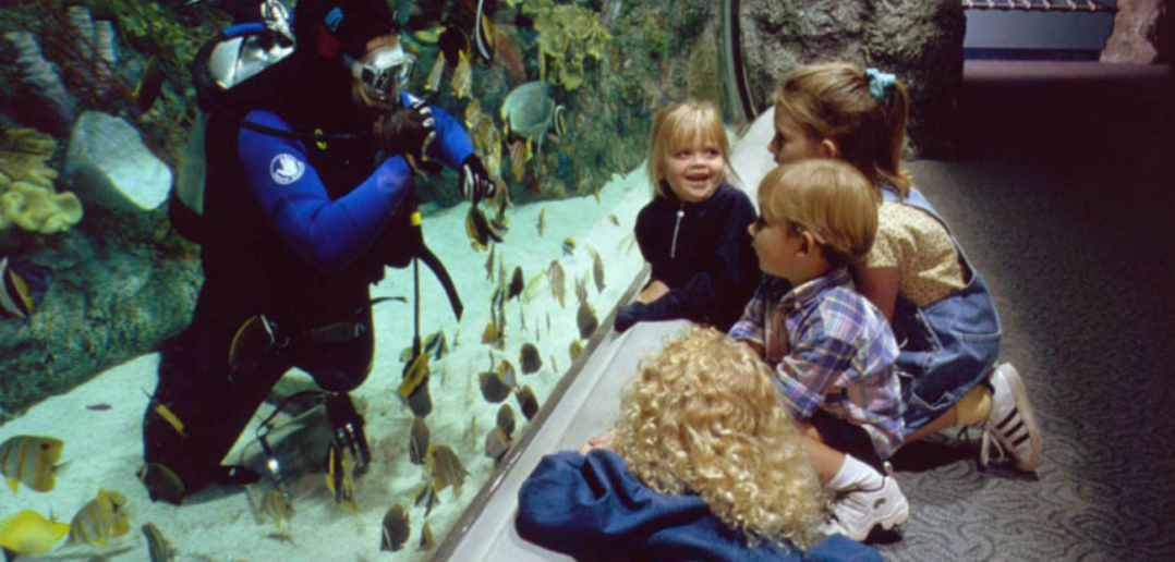 Children are enchanted by divers and by fish at the Aquarium of the Pacific.