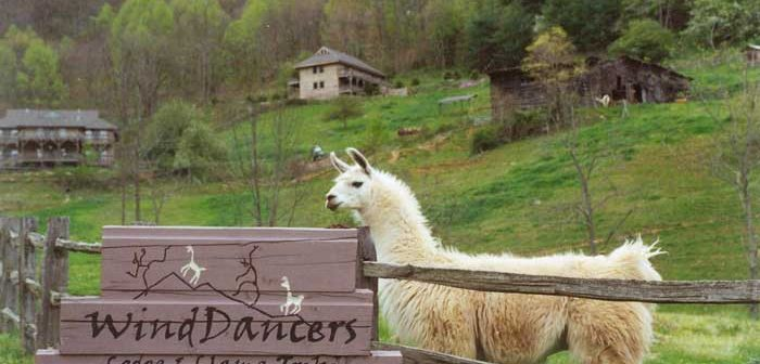 winddancers-sign-llama