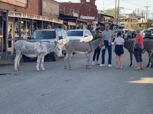 Donkeys in Oatman
